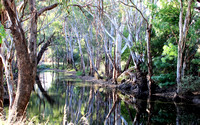 Creek Scene - Tocumwal New South Wales